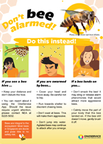 bees-infographic-thumbnail