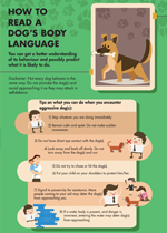 how-to-read-a-dogs-body-language