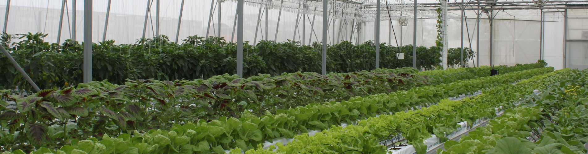Sustainable and high-tech greenhouse